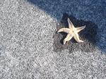 海辺の星?!