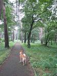 那須街道赤松林にてお散歩チャイ