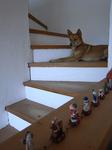お散歩にいきたくて階段途中で待ってるチャイ