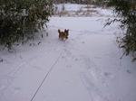 雪の日チャイ