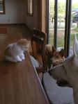 ブラン+ネコチャイ+イヌチャイ