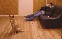 犬2匹と眠るヒト
