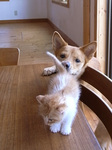 ネコチャイ+イヌチャイ